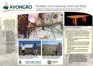 Thumbnail of Avongro's Frankia and swamp sheoak trials fact sheet